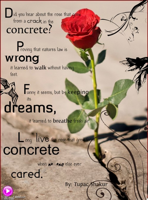 the-rose-that-grew-from-concrete-by-tupac-shakur-source